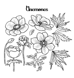 Collection of graphic anemones vector
