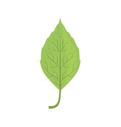 Elm tree green leaf vector