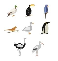 Set of cartoon birds vector