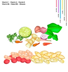 Thai Herbs with Vitamin C A K B6 and B9 vector image