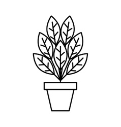 Plant in pot isolated icon vector