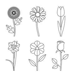flowers line drawings vector image