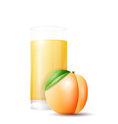 Apricot and glass of juice vector
