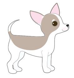Chihuahua vector image vector image