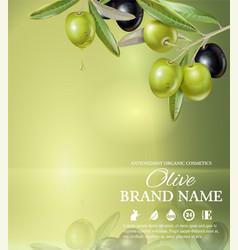 Olive green banner vector image
