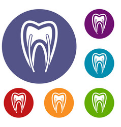 Tooth cross section icons set vector