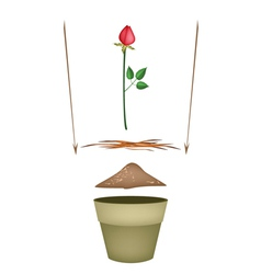 Terracotta flower pots with soil and red rose vector