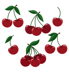 cherry berry set for logo vector image vector image