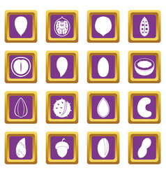 nuts icons set purple vector image