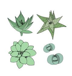 set of succulents hand drawn botanical art vector image vector image