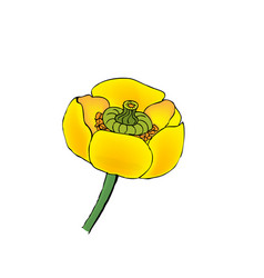 - blooming yellow water-lily vector
