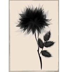beautiful black flower surrounded vector image