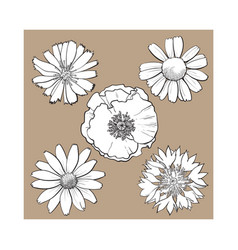 Set of wild field flowers - poppy chamomile vector