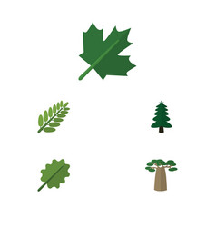 Flat icon nature set of baobab oaken leaves and vector
