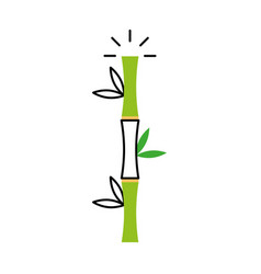 Bamboo stem natural icon vector