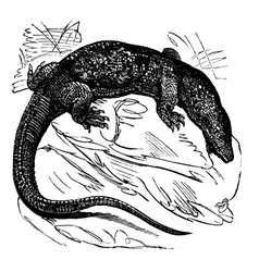 Nile monitor vintage engraving vector image