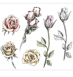 Set of hand drawn roses flowers vector