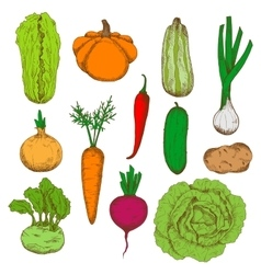 Healthy fresh harvested vegetables sketch icons vector