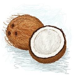 Closeup of a half and whole coconut vector