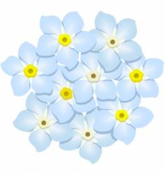 forget-me-nots vector image