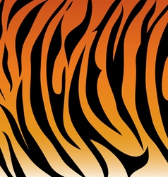 Tiger pattern vector image