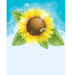 Beautiful sunflower and green leaves vector image