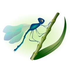 Dragonfly with blue wings EPS10 vector image