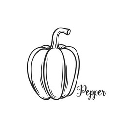 Hand drawn pepper icon vector