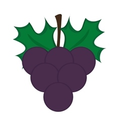 Grape bunch icon vector