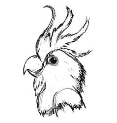 Head of parrot vector