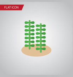 Isolated alga flat icon seaweed element vector