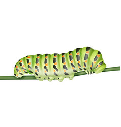 Green machaon caterpillar vector