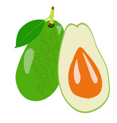 isolated pair of avocados vector image