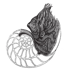 Nautilus vintage engraving vector