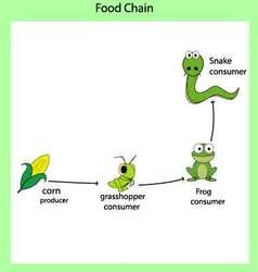 Food chains vector