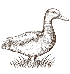Hand drawn duck vector