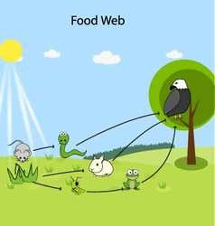 Food web vector