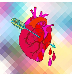 Anatomical heart with arrow vector image vector image