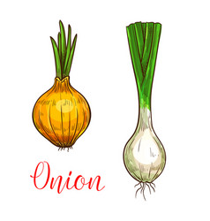 Onion leek sketch vegetable icon vector