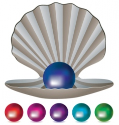 pearls and shell vector image