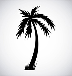 Tree palm design vector