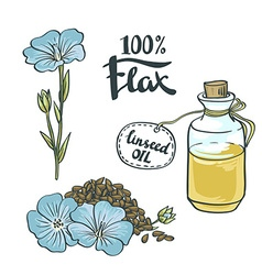 Flax Seeds Oil in a Glass Bottle with flowers vector image