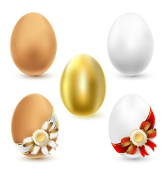 Chicken eggs vector