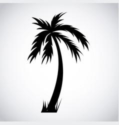 tree palm design vector image