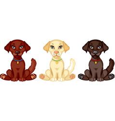 Puppy labrador vector