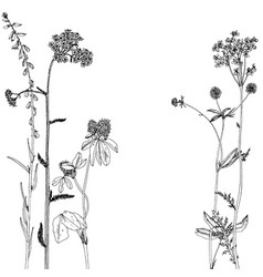 Background with ink drawing herbs and flowers vector
