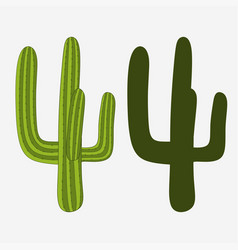 mexican cactus desert plant vector image vector image