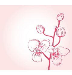 Sakura flower vector
