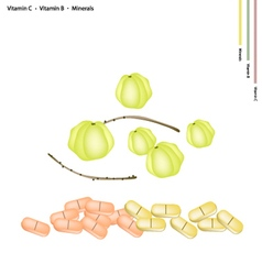 Star gooseberries with vitamin c b and minerals vector