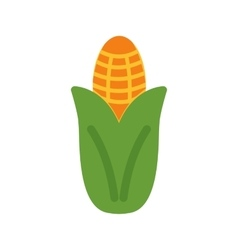 Corn maize vector